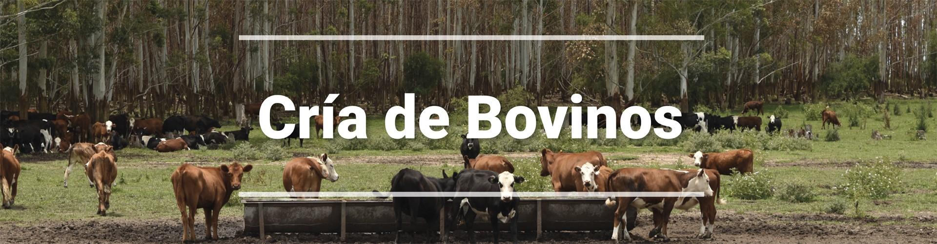 Cría de Bovinos 1920 x 500-fadel-header
